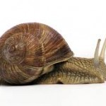 Is your website really slow?